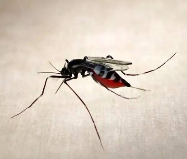 玻璃昆虫艺术 尺寸近乎一比一制作