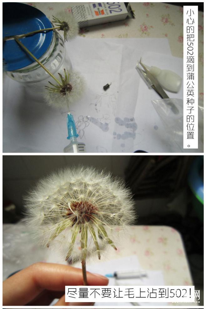 蒲公英透明树脂教程