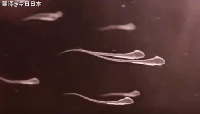 日本教育短片《生命诞生物语》刷屏:看得令人感动