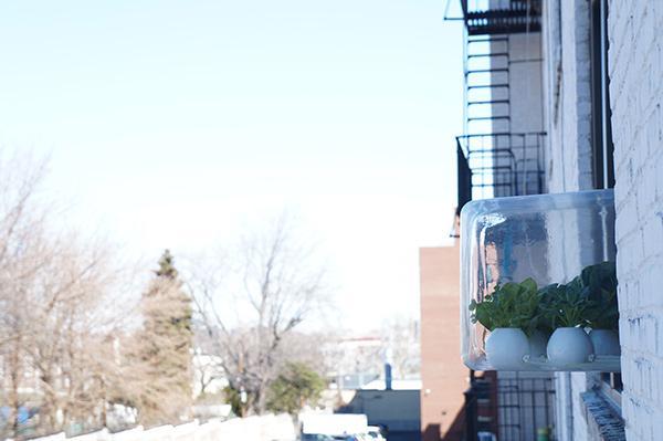 挂在窗户上的盆栽