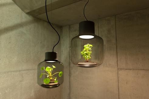 玻璃瓶灯具里的自循环生态