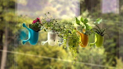 吸附在玻璃窗上的小盆栽