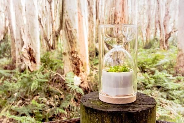 Livesglass 沙漏式植物温室