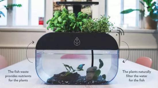 """""""自给自足""""的生态鱼缸EcoGarden-玩意儿"""