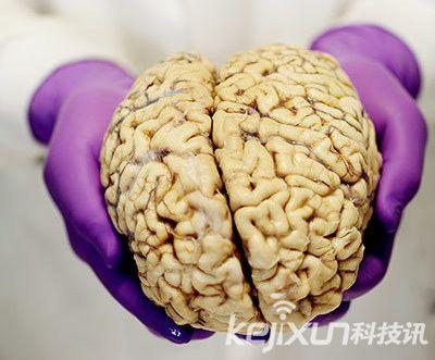 荷兰科学家成功将人类大脑里指定记忆删除-详细描述-玩意儿