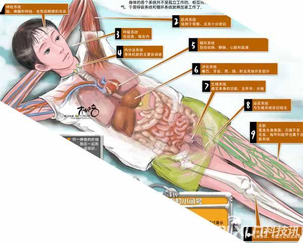 医学革命性研究成果 人体器官或可再生-具体内容-玩意儿