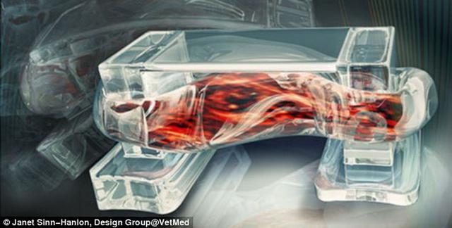 """科学家用骨骼肌研制""""生物机器人"""""""