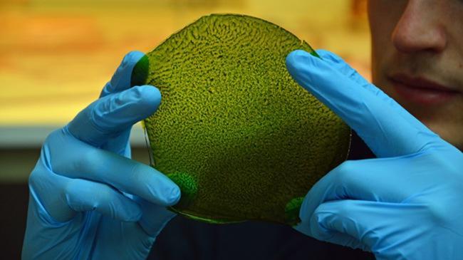全球第一片人造绿叶诞生