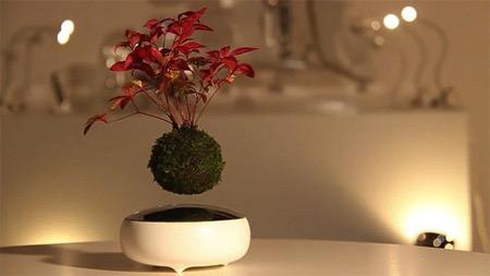 日本黑科技:空中盆景(Air Bonsai)