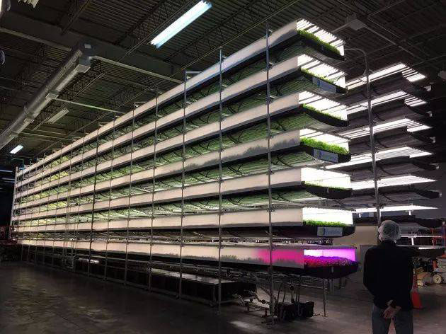 室内种植新技术 未来全球 97 亿人都靠它吃饭