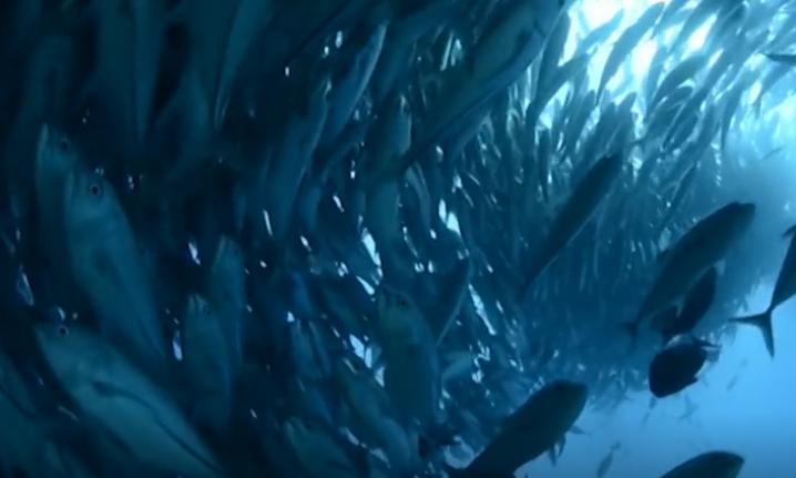 科学家研发出逼真的机器鱼混进鱼群,还当了带头大哥-玩意儿