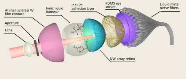 香港大学研发3D仿真眼 未来有望让让失明人士重见光明