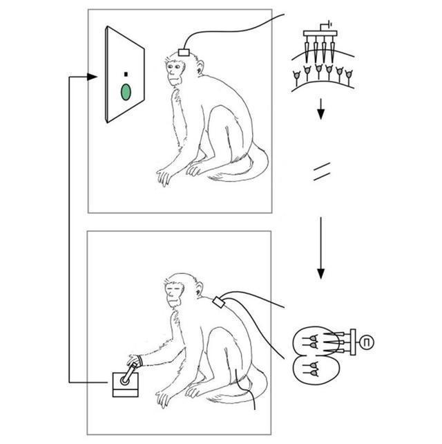 """美科学家在猴子中实现""""阿凡达""""式异体控制"""
