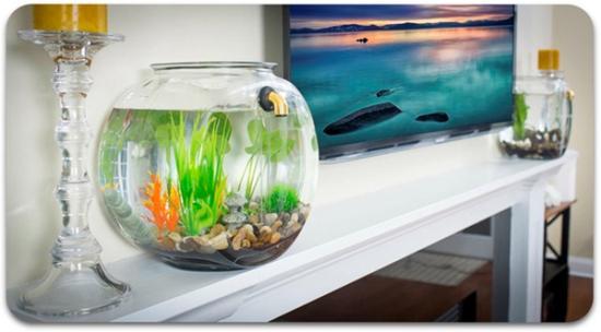 自动排污换水的鱼缸