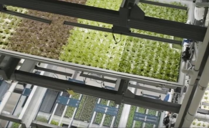 种植全靠机器手的无人农场,产量比传统种植高