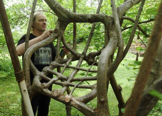 奥地利艺术家打造自然生长树椅 耗时20年完成