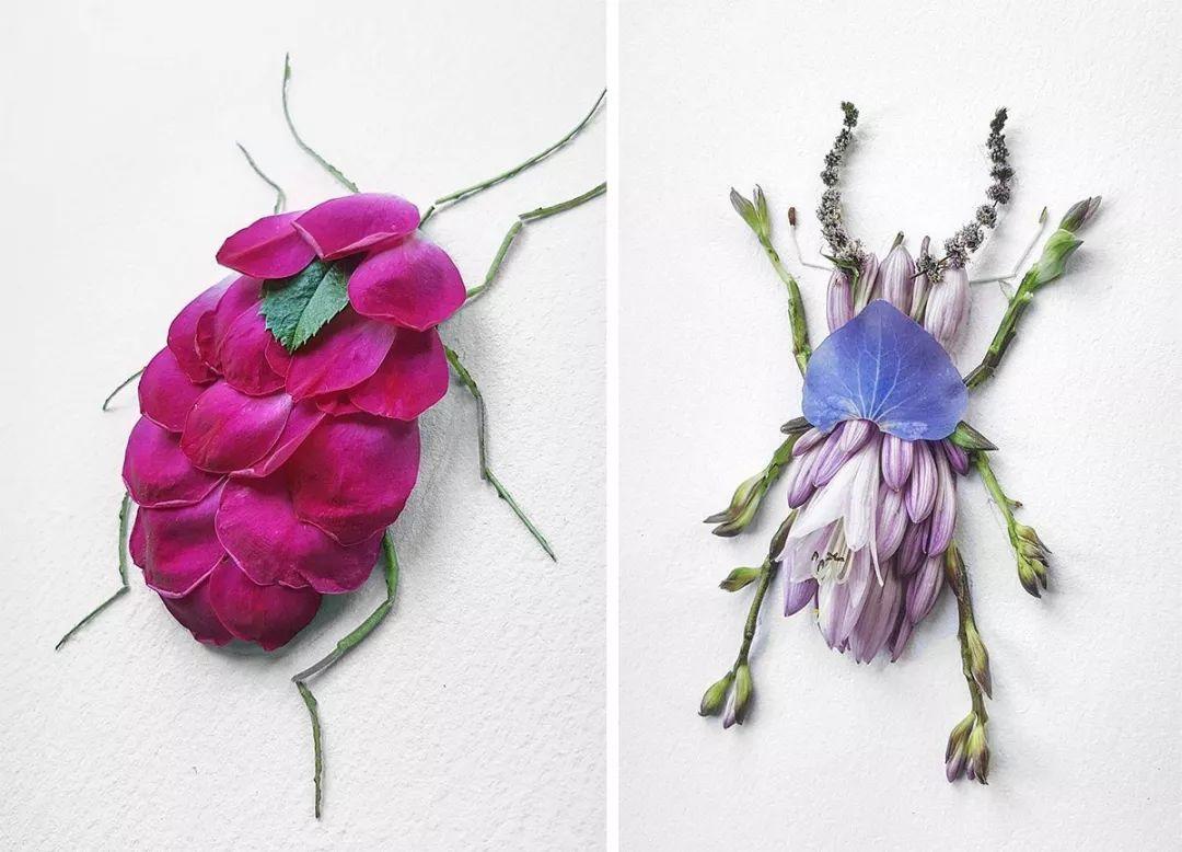 用花瓣和树叶做一个昆虫世界